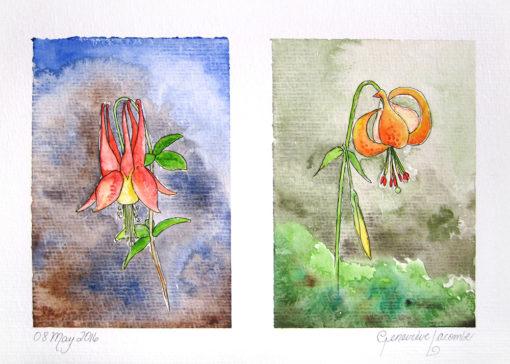 flowers_columbine_tigerlili_forGallery