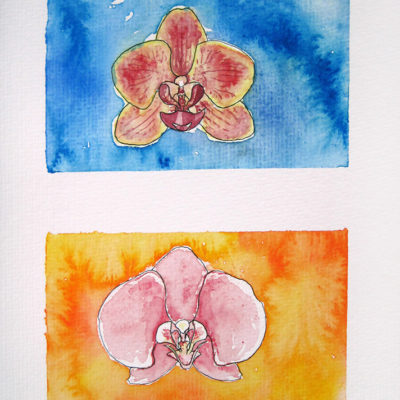 'Mo's Orchids'
