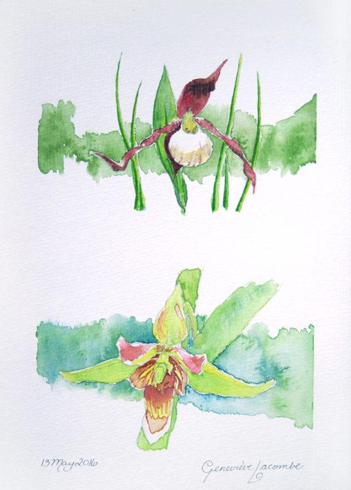 'Wild Orchids'