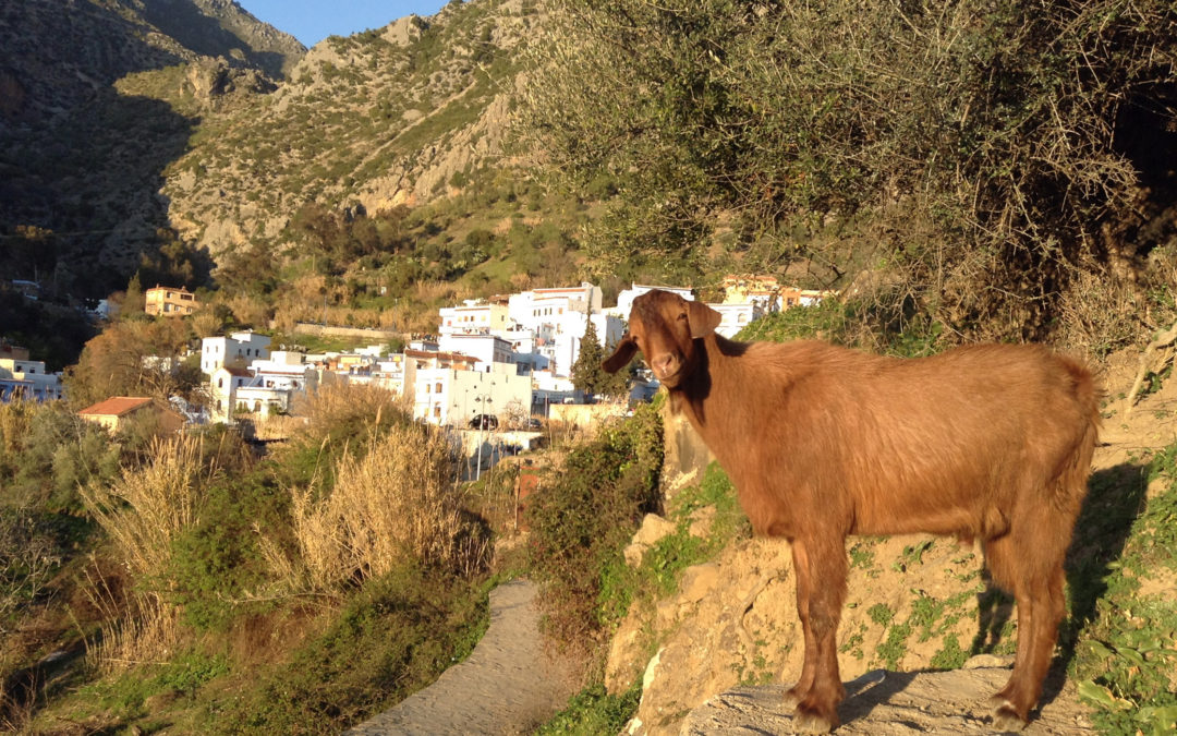 Chefchaouen: Why I hate haggling
