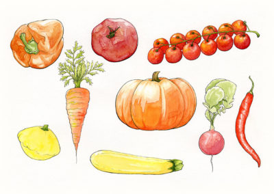 A Collection of Veggies