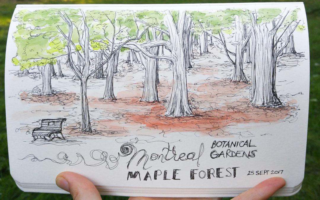 Montreal Botanical Gardens Sketching Essay