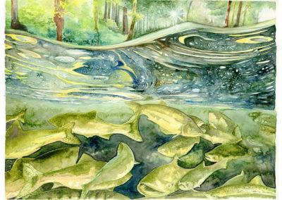 Wild Salmon Underwater